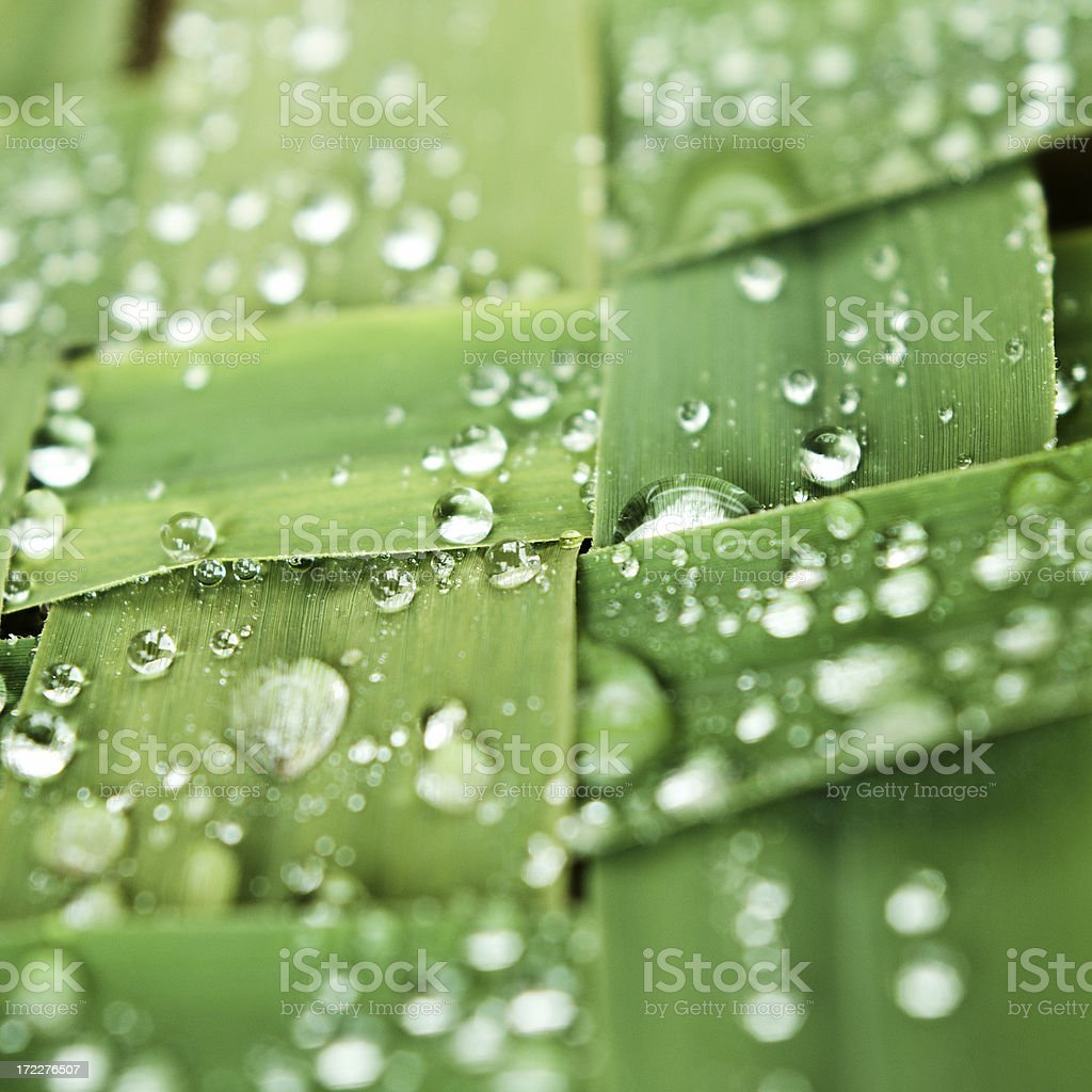 Green royalty-free stock photo