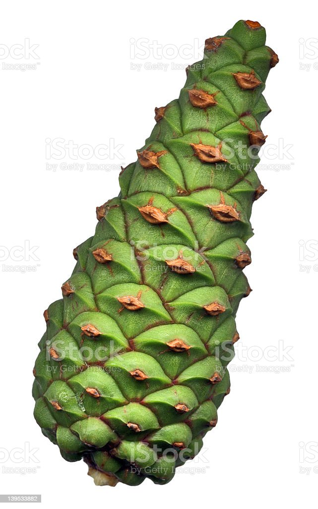 Green pine Stożek zbiór zdjęć royalty-free