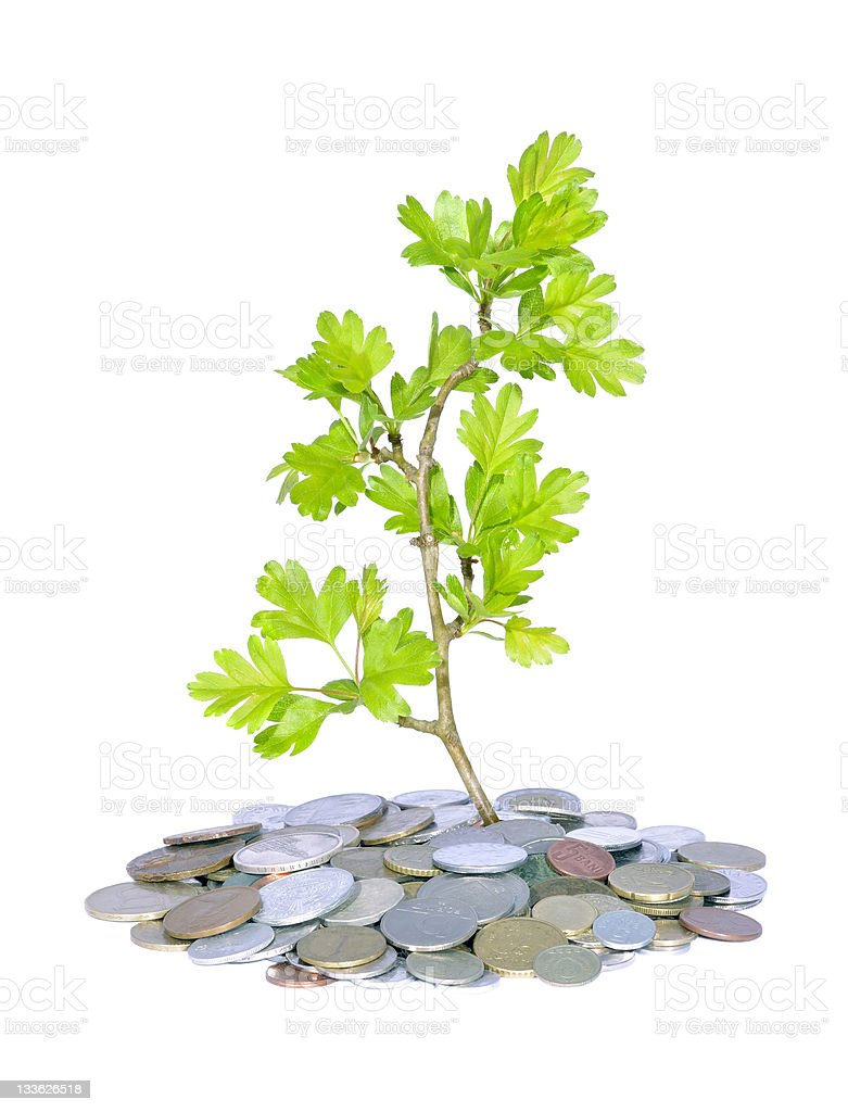 green plant and money royalty-free stock photo