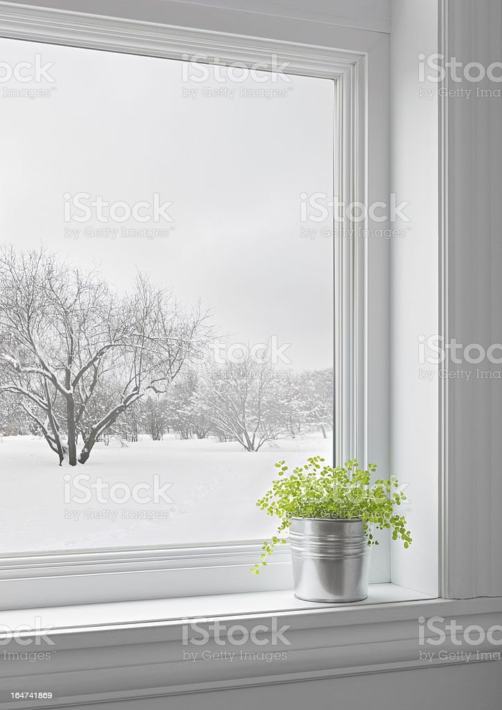 Green plant and winter landscape seen through the window royalty-free stock photo