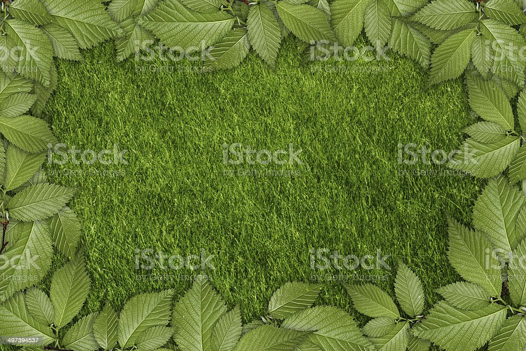 green plant background royalty-free stock photo