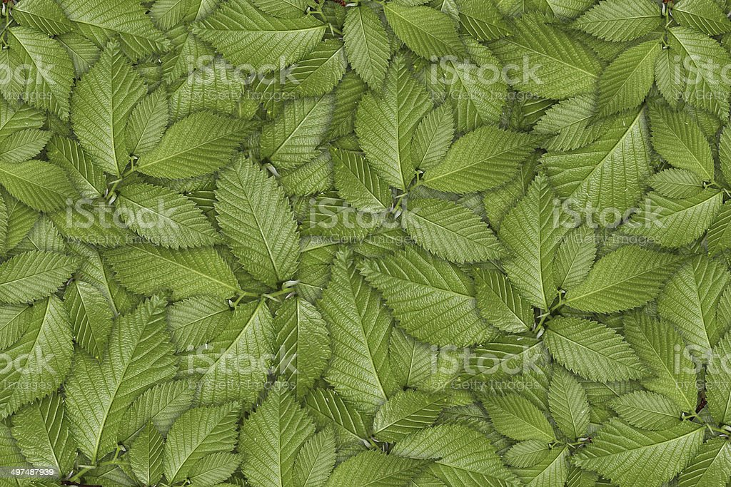 green plant background, young growth royalty-free stock photo