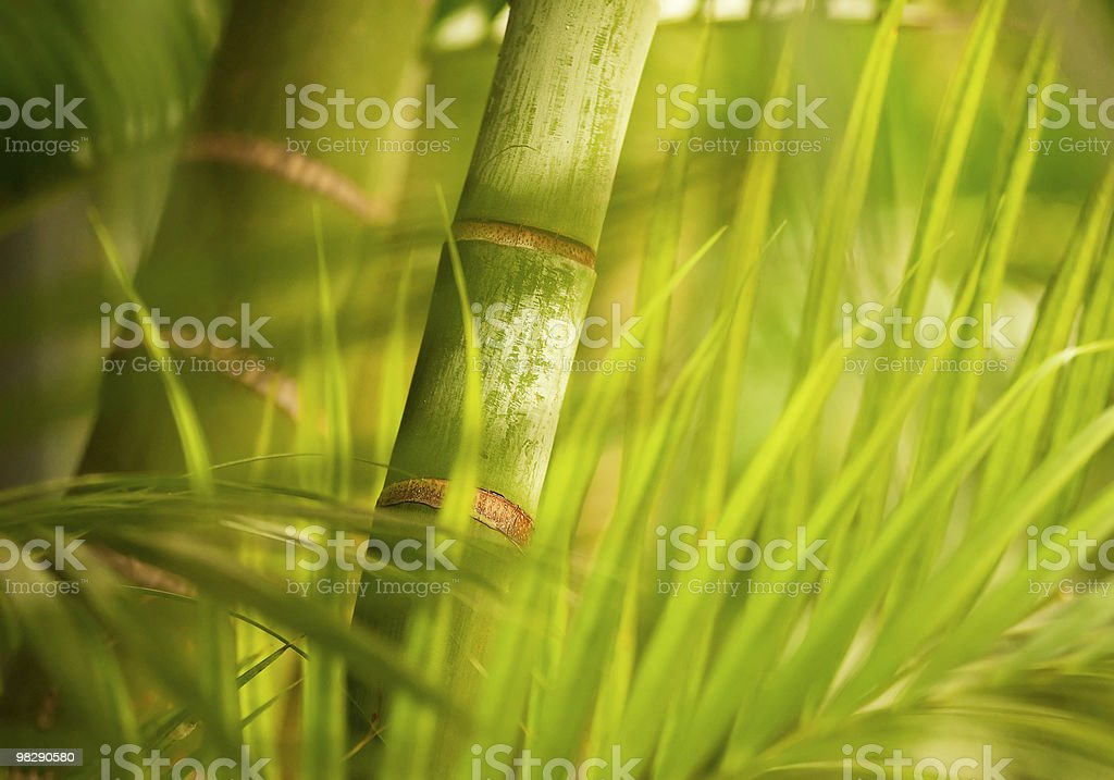 Green plant close-up royalty-free stock photo