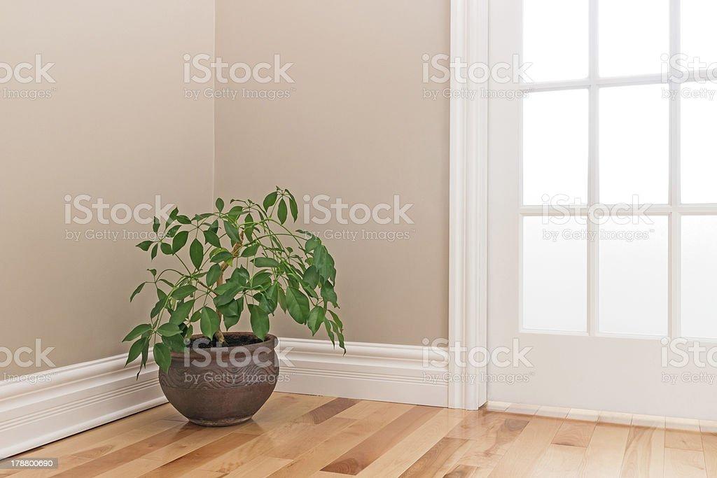 Green plant decorating a room corner stock photo