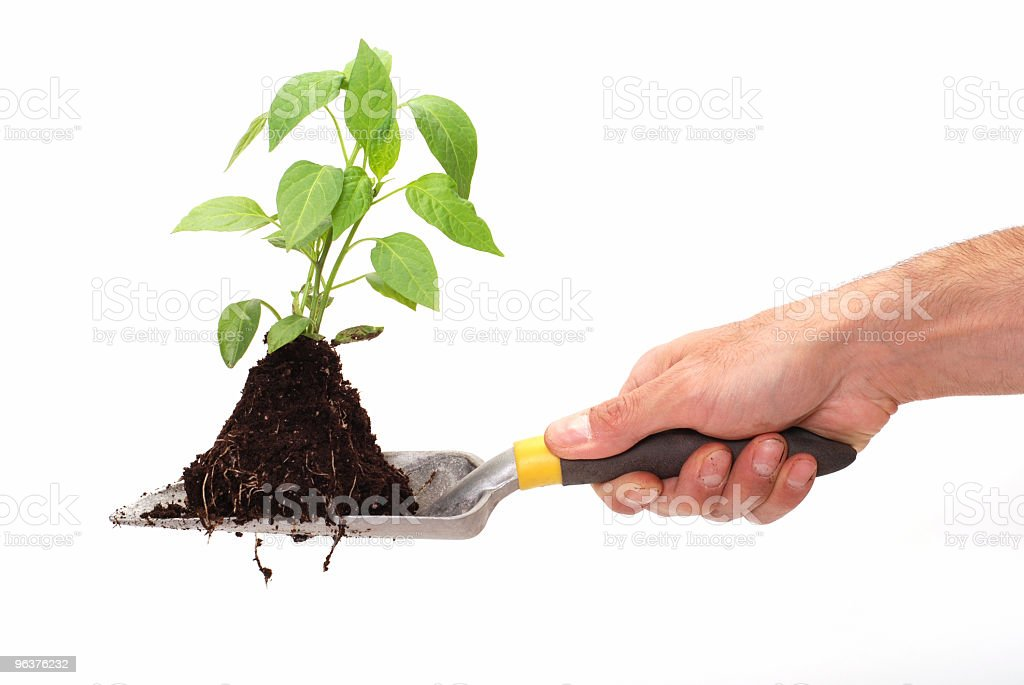 Green plant for better environment royalty-free stock photo