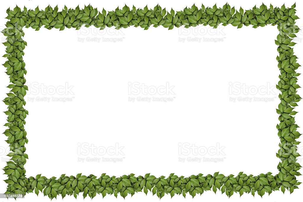 Green plant frame royalty-free stock photo