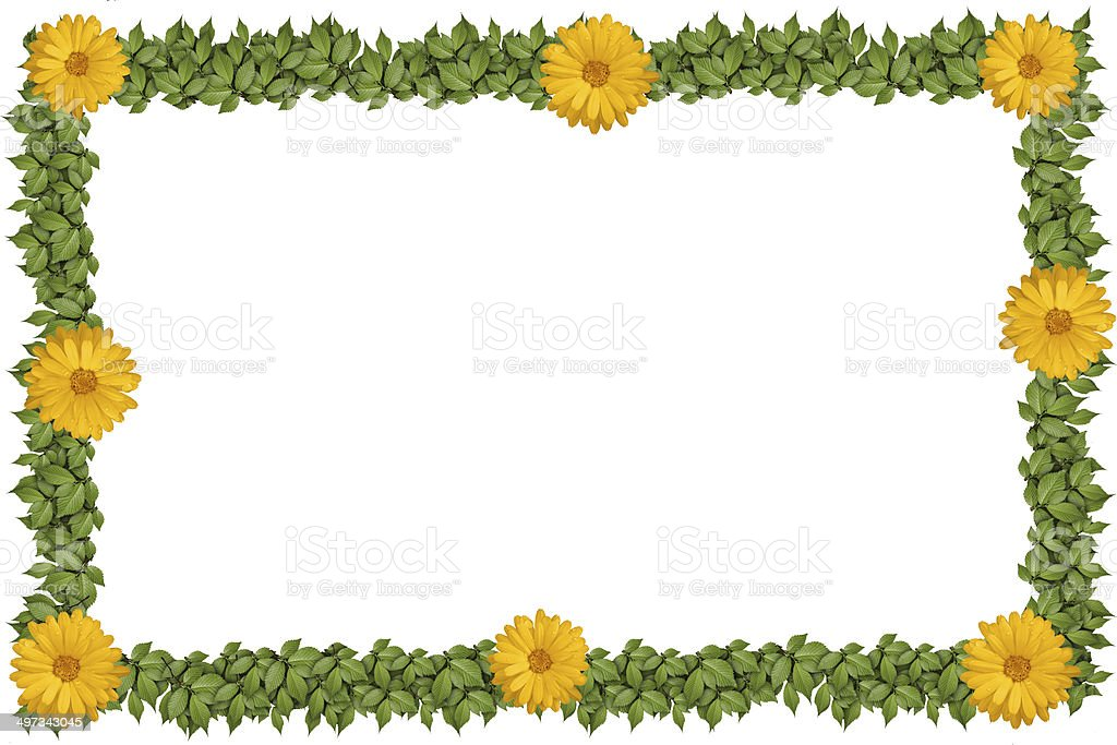 Green plant frame with flowers royalty-free stock photo