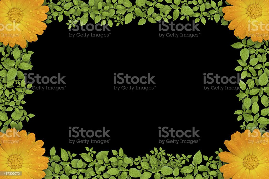 Green plant frame with yellow flowers royalty-free stock photo
