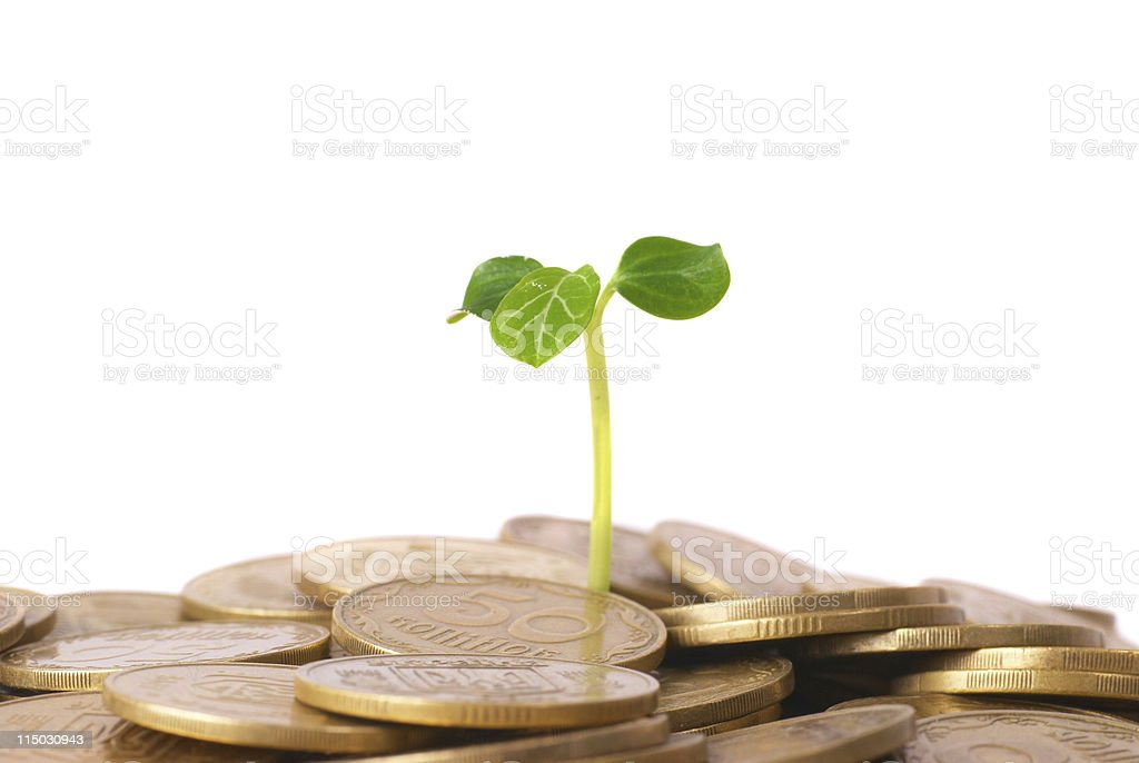 Green plant growing from the coins royalty-free stock photo