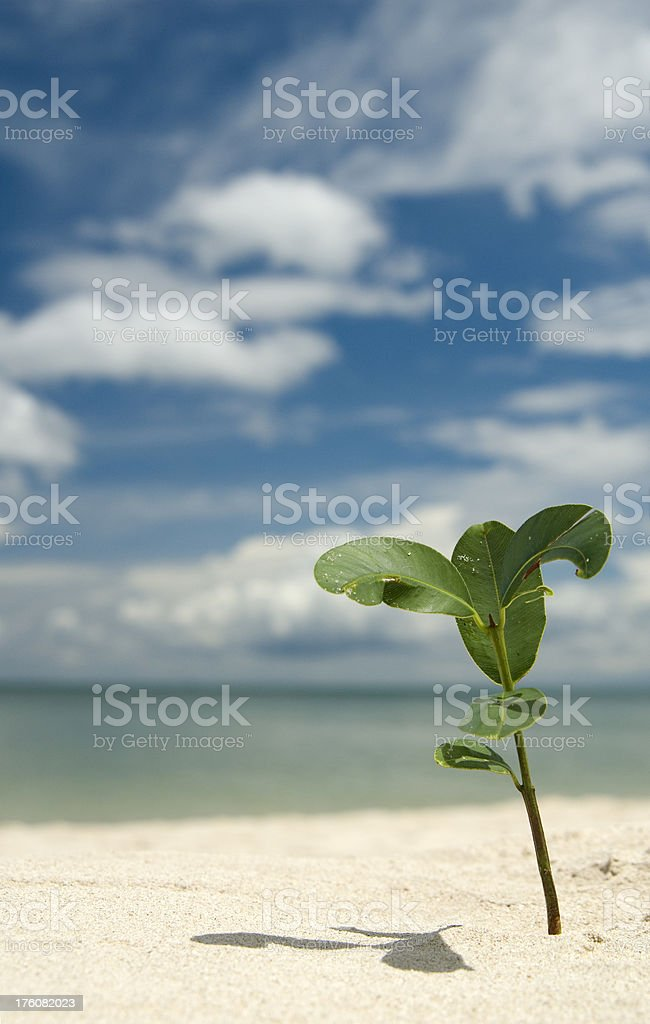 Green plant growing on a white sand beach royalty-free stock photo