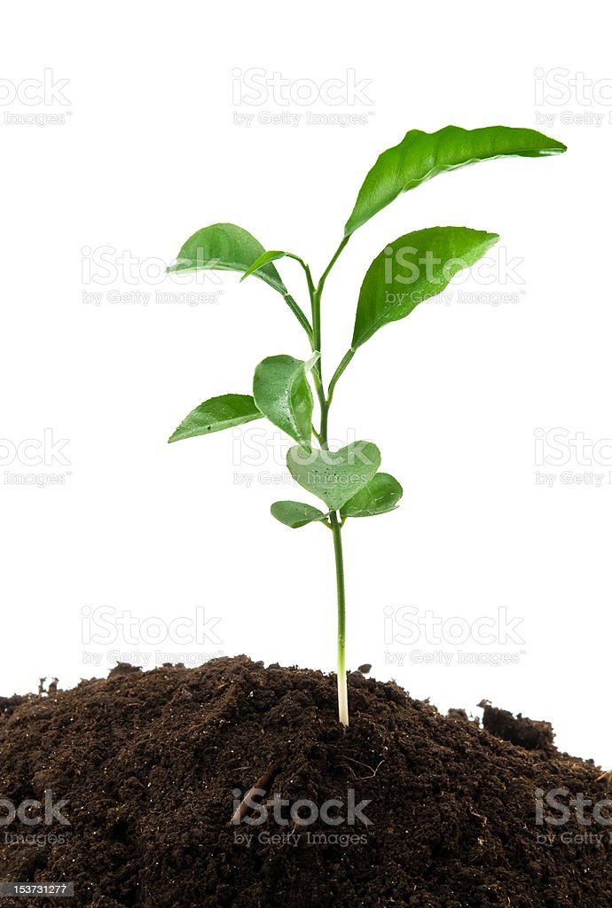 green plant growing royalty-free stock photo