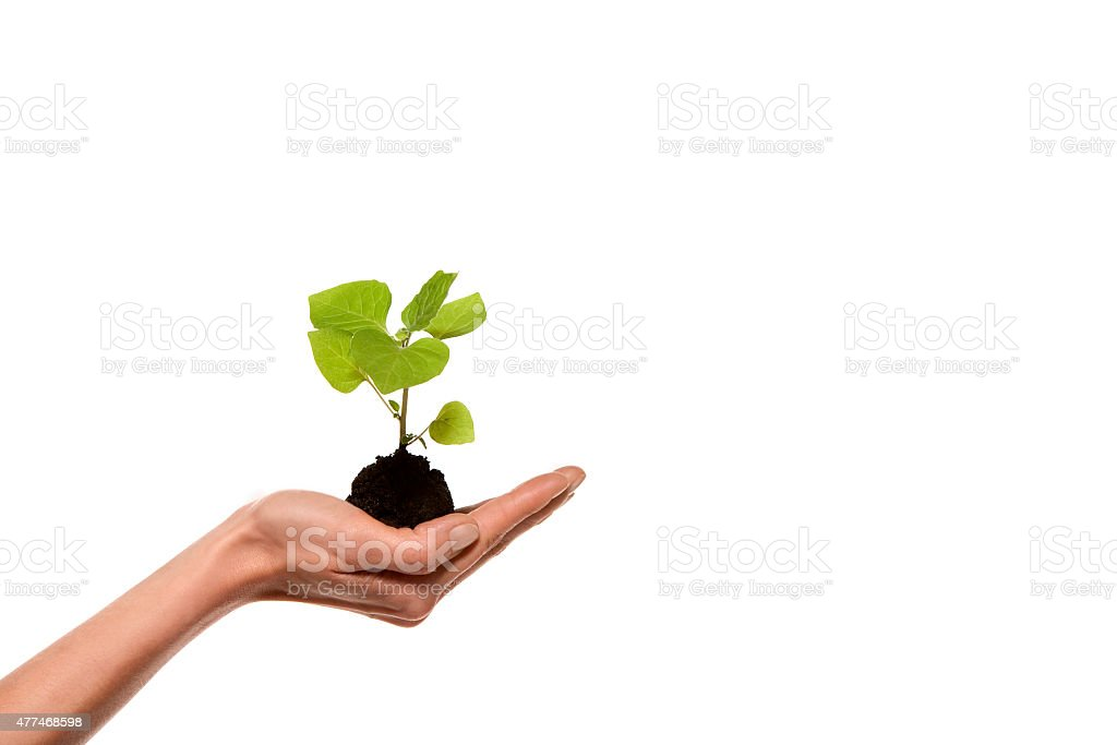 Green plant growth in hand stock photo