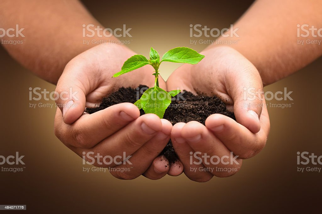 Green plant in a child hands stock photo