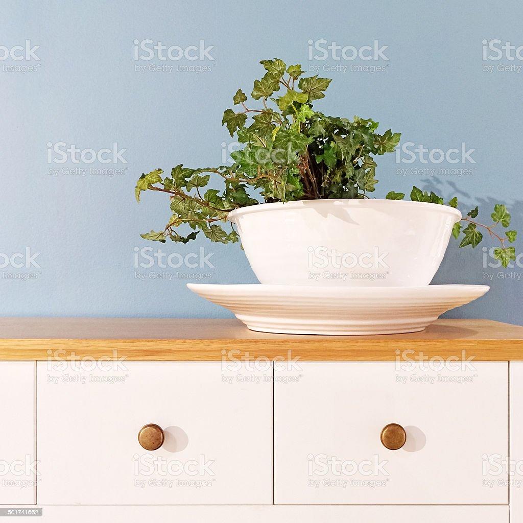 Green plant in a decorative white pot stock photo