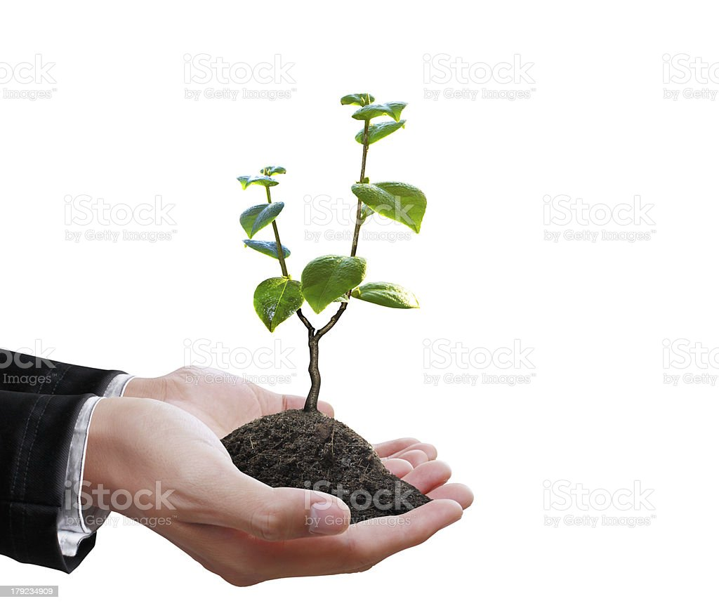 green plant in a hand royalty-free stock photo