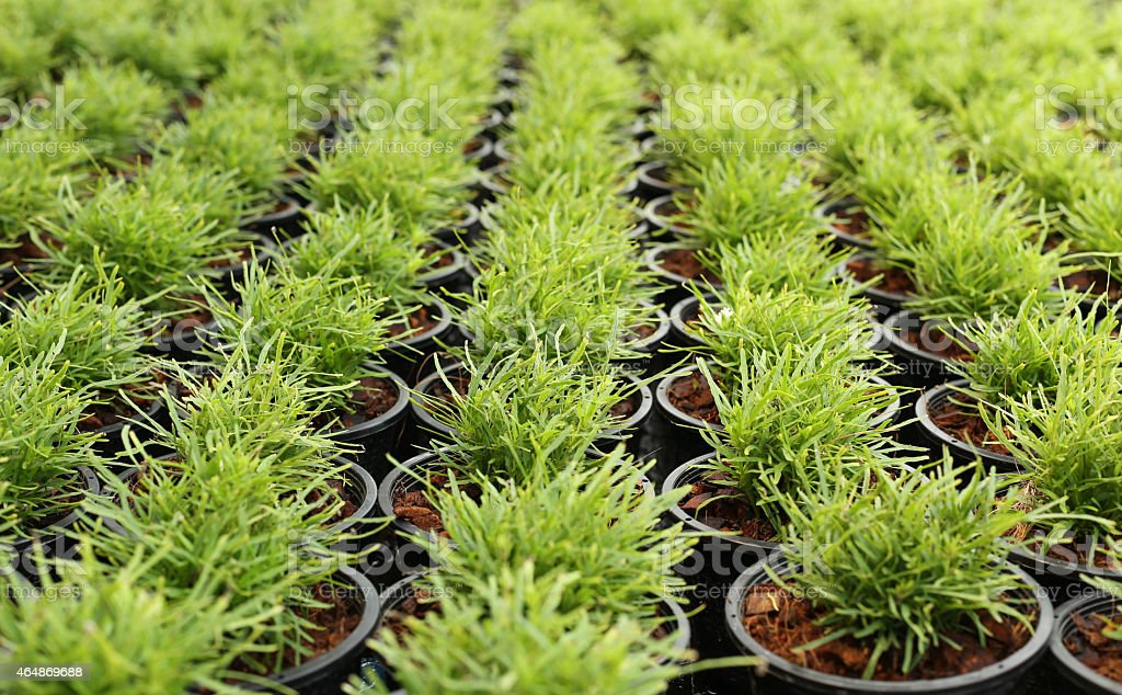 Green plant in a pot nursery stock photo
