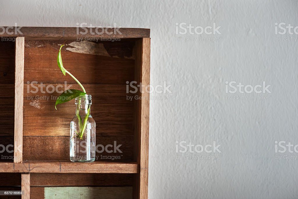 Green plant in bottle stock photo