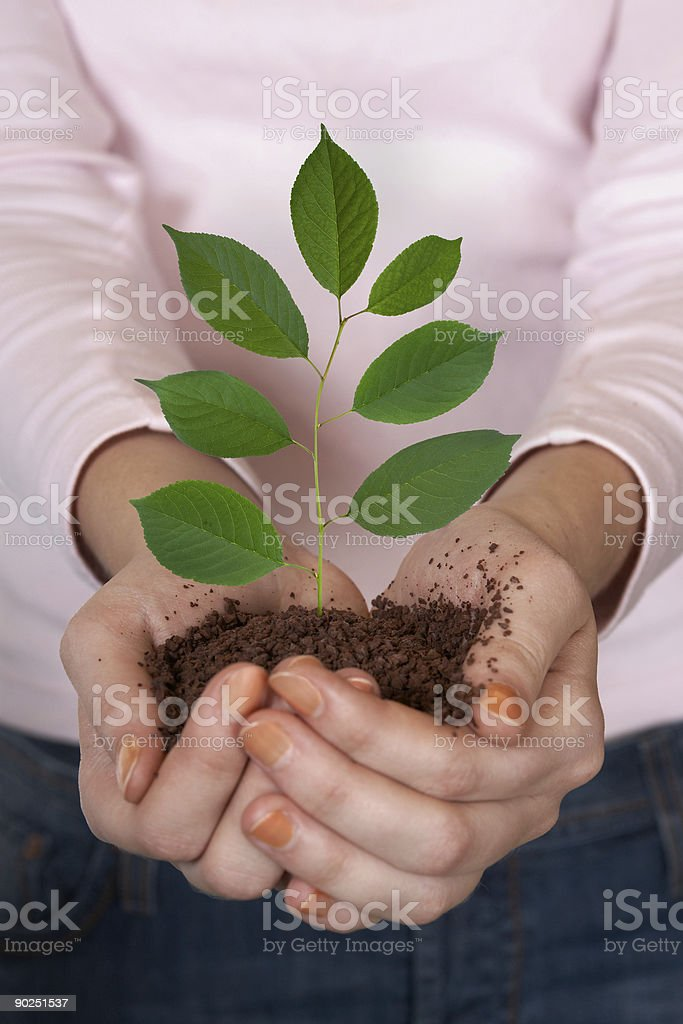 Green plant in hands royalty-free stock photo