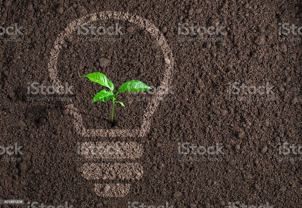 Green plant in light bulb silhouette on soil background stock photo