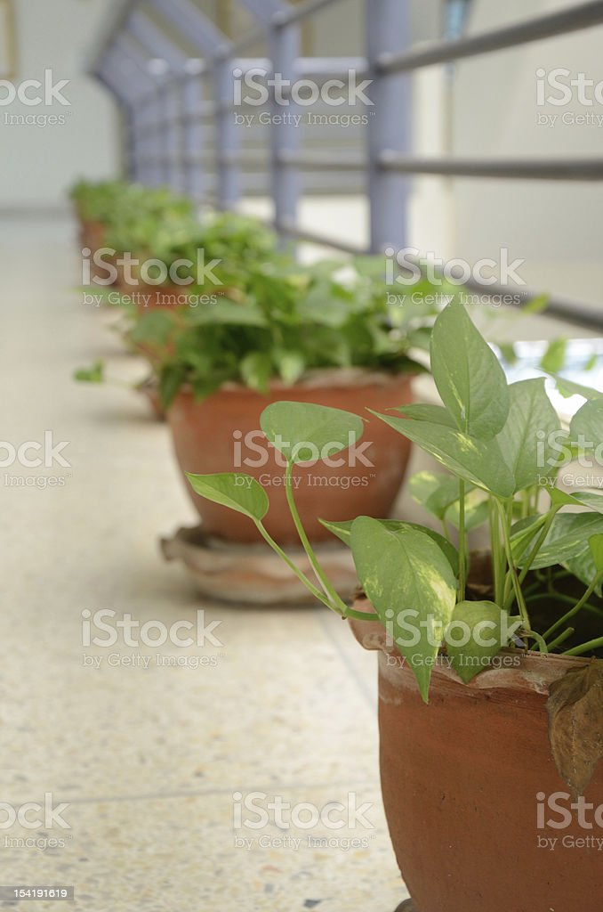 green plant in Pot royalty-free stock photo