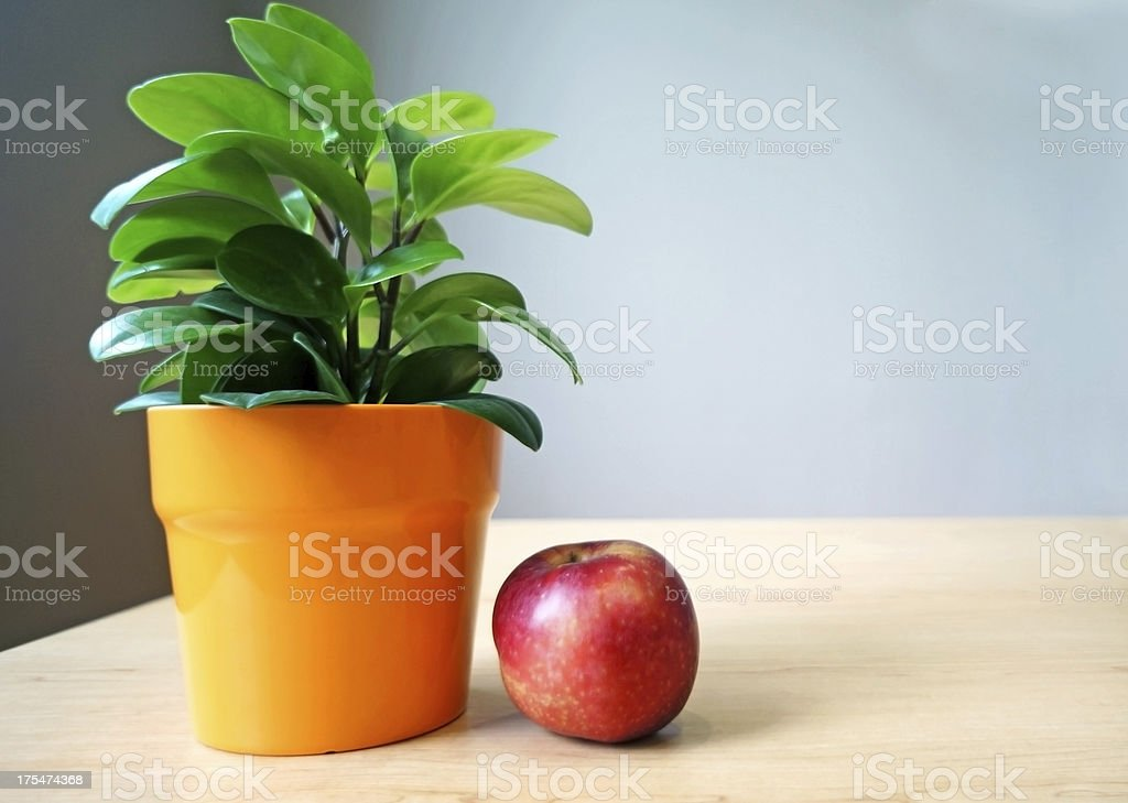 Green plant in pot with red apple royalty-free stock photo
