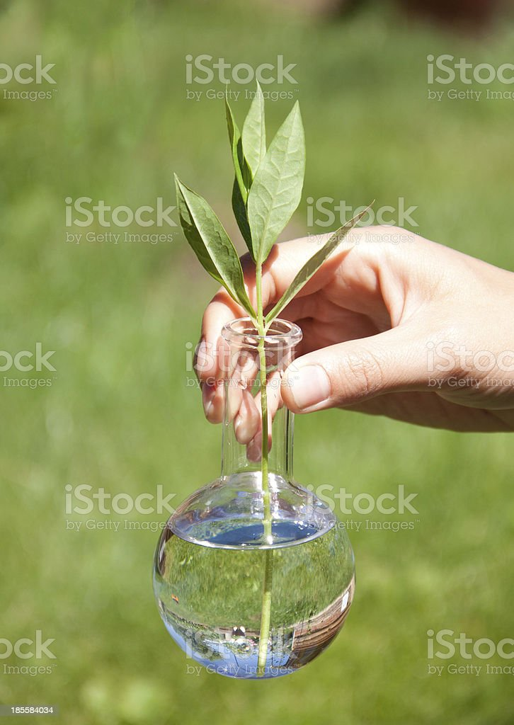 Green plant in test tube royalty-free stock photo
