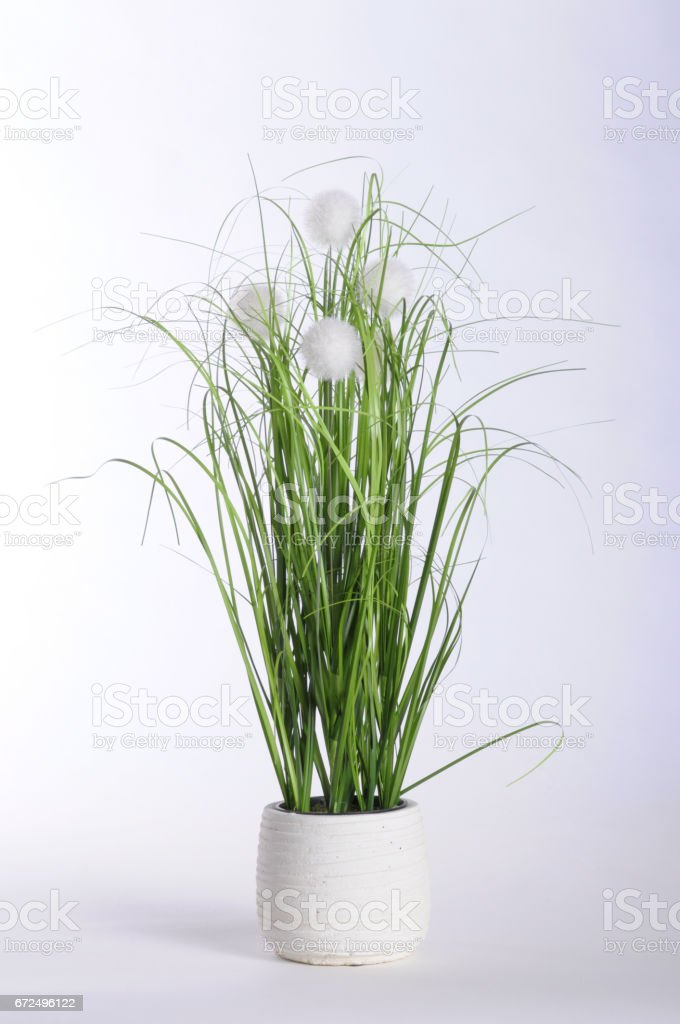 Green plant in white pot and white background stock photo