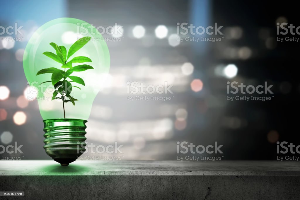Green plant inside light bulb stock photo