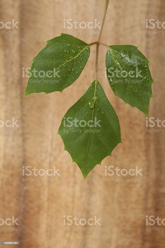 Green plant leaf with water drops royalty-free stock photo