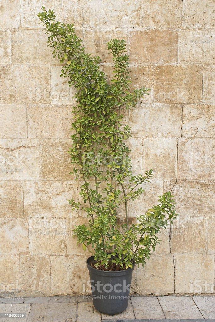 Planta verde encostada em uma parede de pedra foto royalty-free