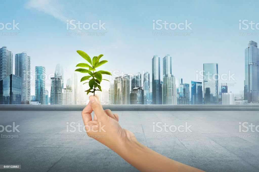 Green plant on human hand on modern city stock photo