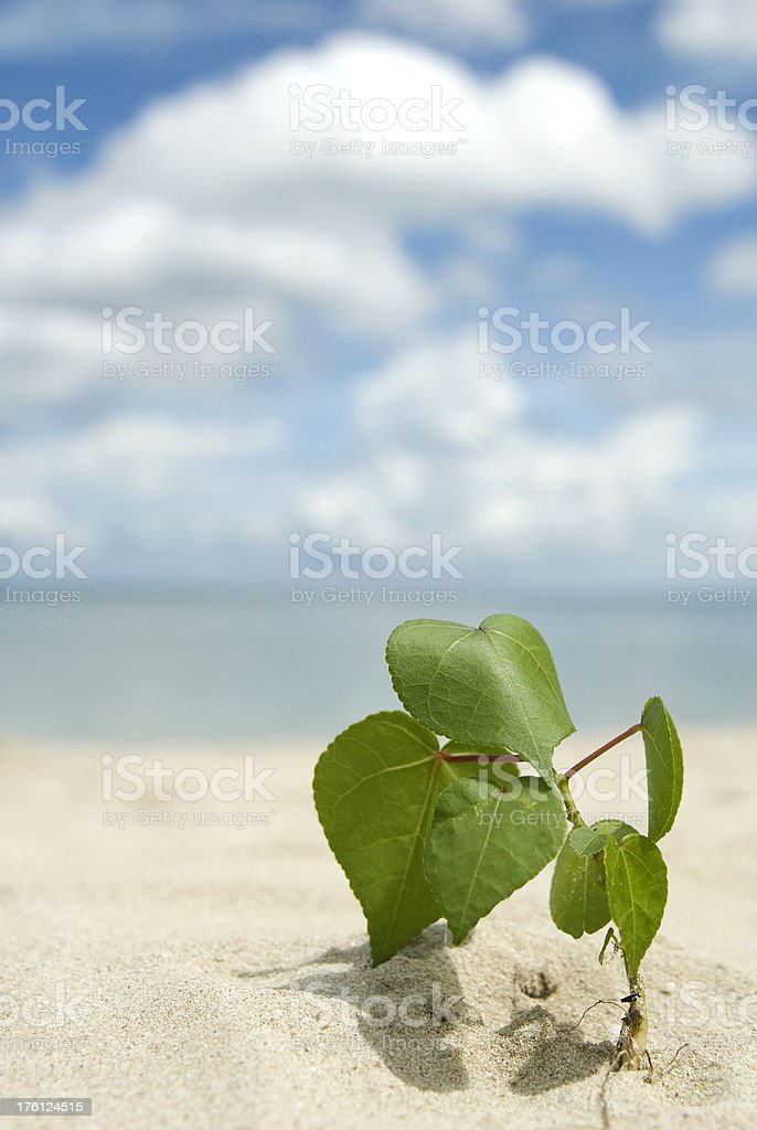 Green plant on the beach stock photo