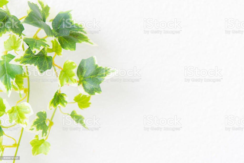 Green Plant on white wall stock photo