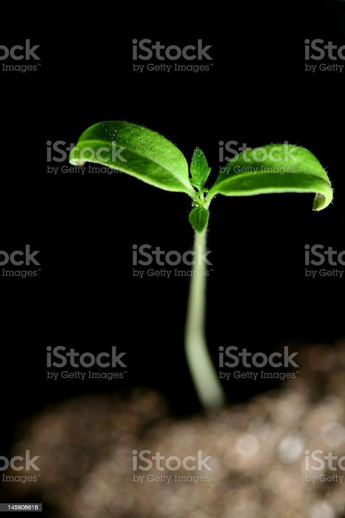 green plant royalty-free stock photo