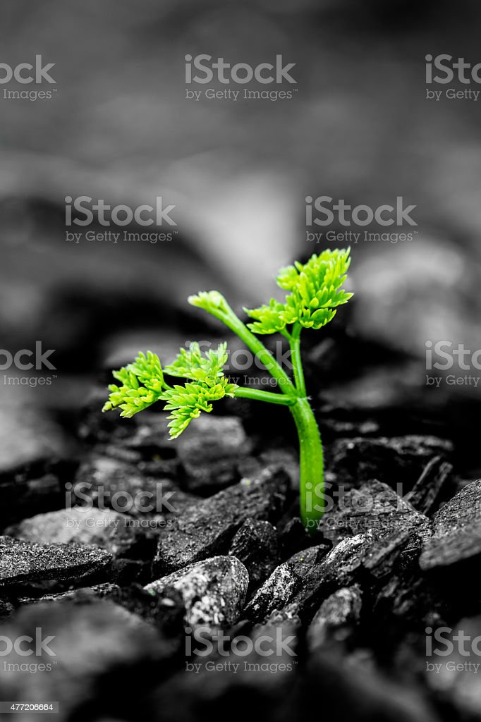 green plant stock photo
