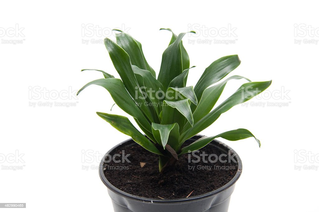 Green plant with garden mould stock photo