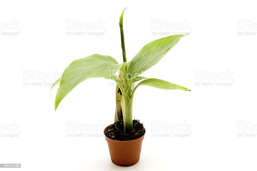 Green plant with pot stock photo