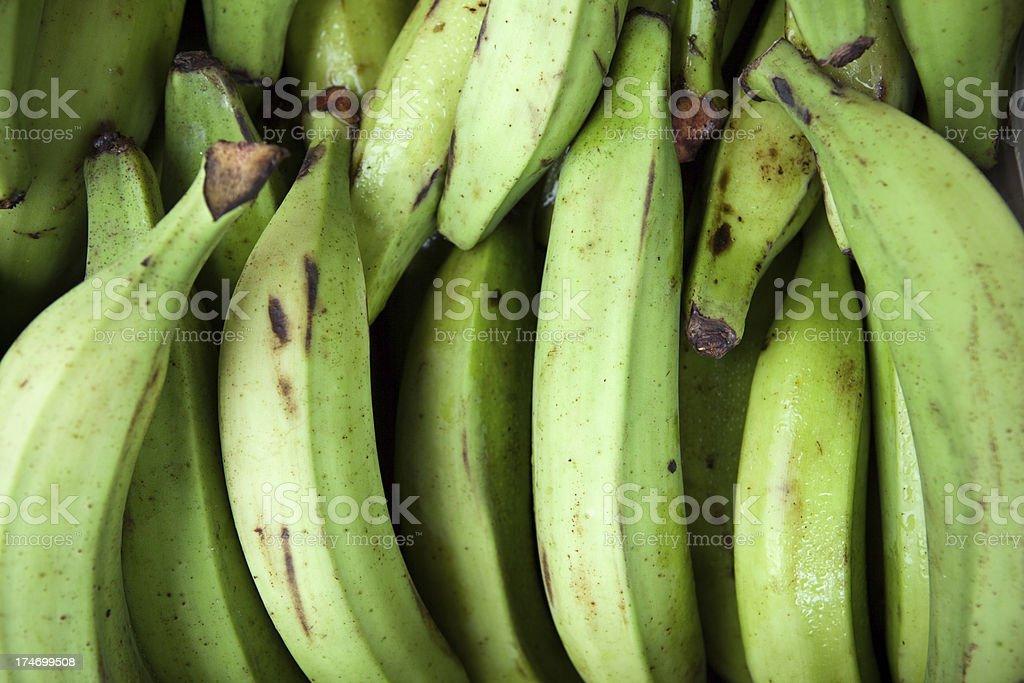 green Plantain stock photo