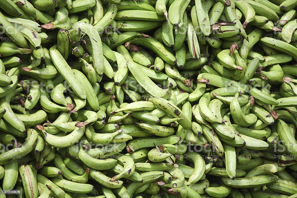 Green plantains royalty-free stock photo