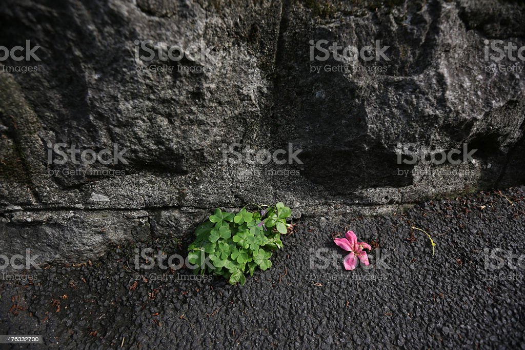 Green Plants and Pink Flower by Stone Wall, Tokyo, Japan stock photo