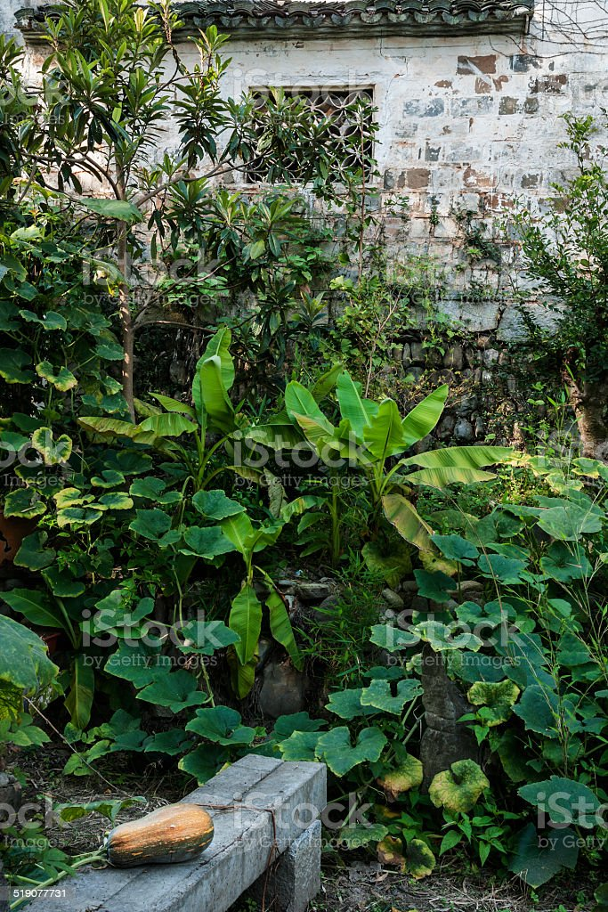 Green plants and squash stock photo