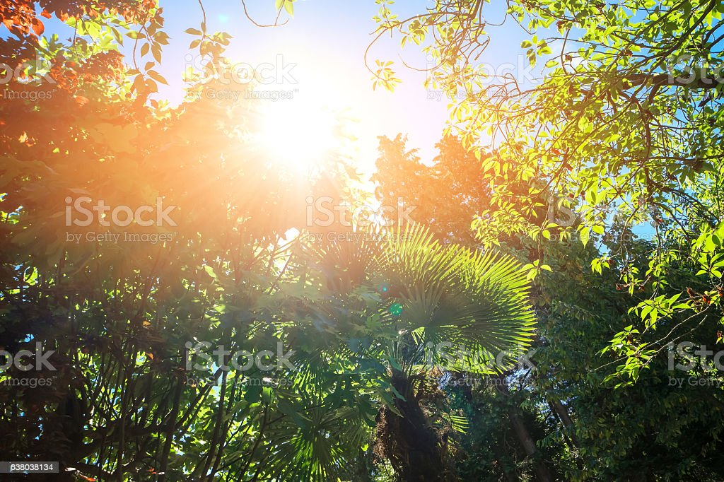Green plants and sunlight. stock photo