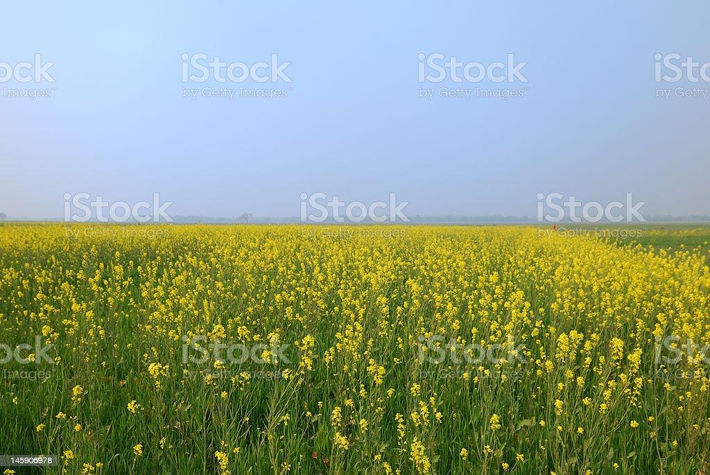 Green plants, blue sky stock photo