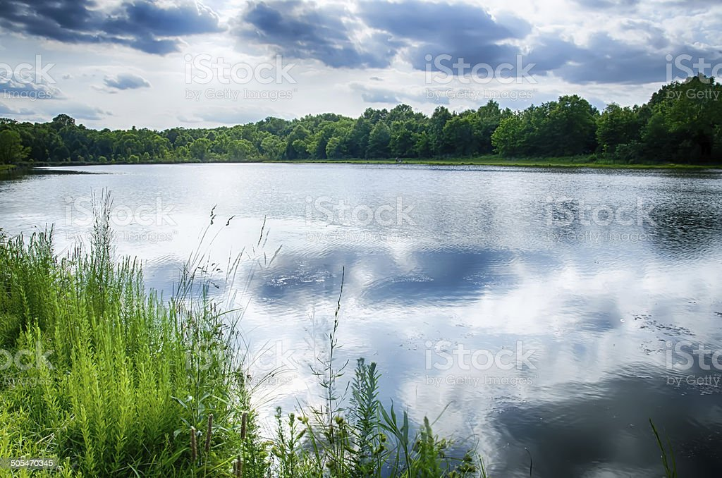 green plants by the remote lake stock photo