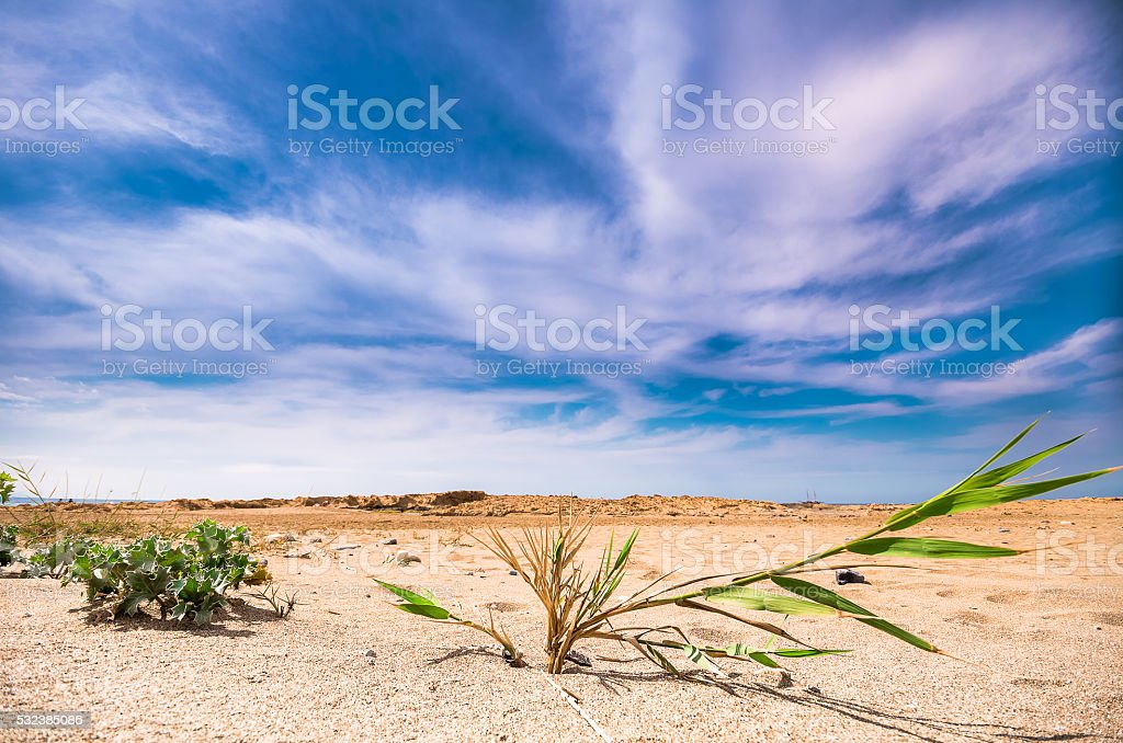 Green plants contrasts to the hot sand. stock photo