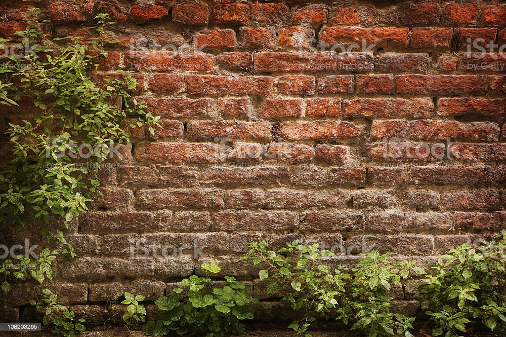 Green Plants Framing Old Brick Wall stock photo
