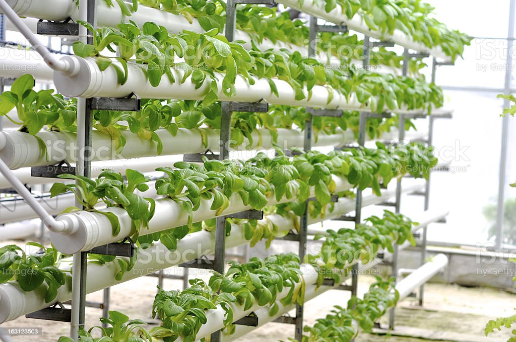 Green plants growing on rollers in an industrial green house stock photo