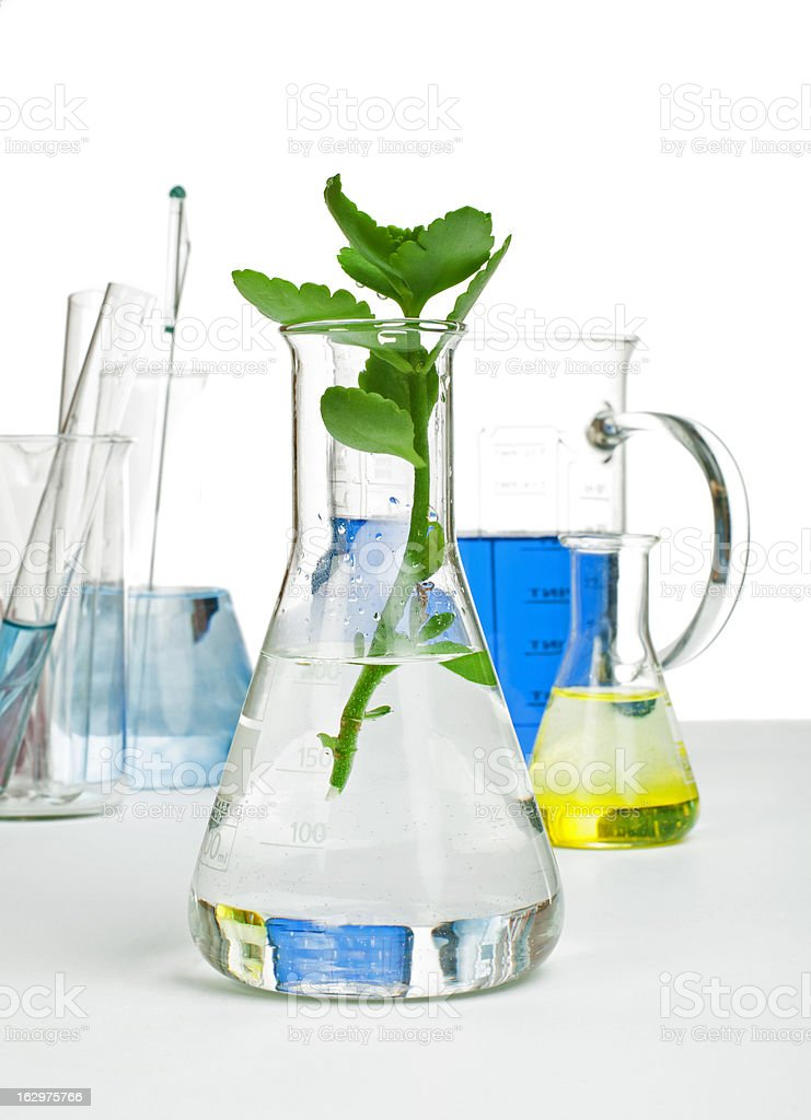 Green plants in laboratory equipment royalty-free stock photo