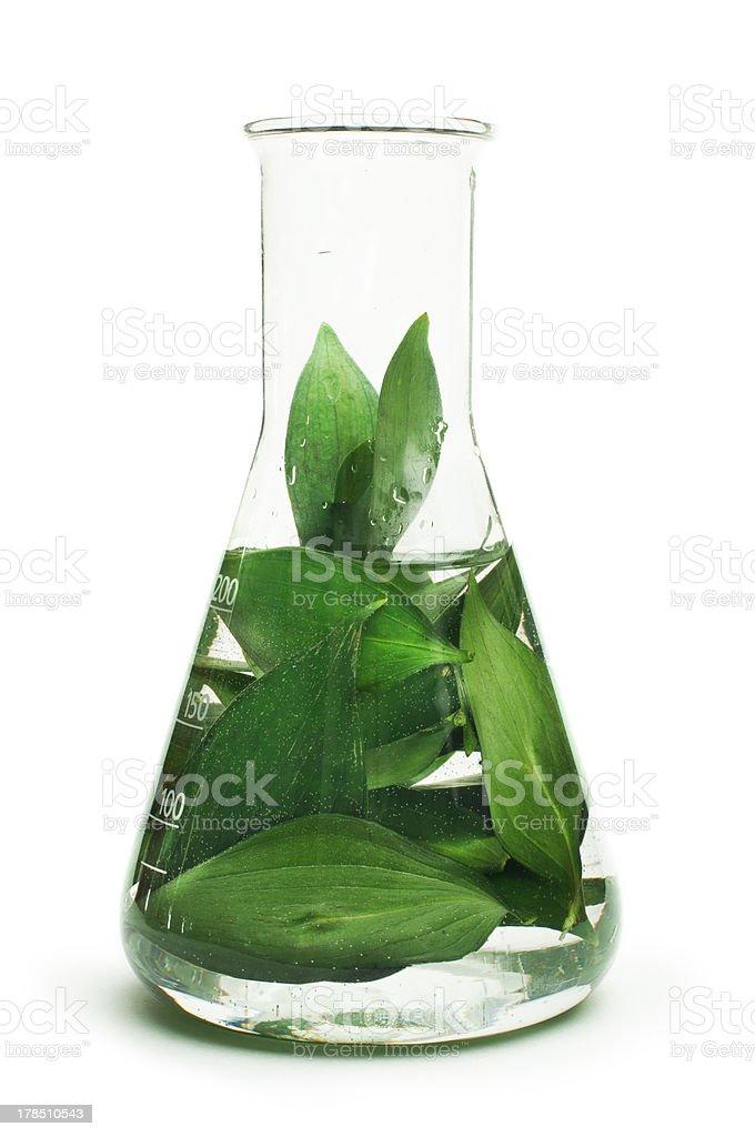 Green plants in laboratory equipment stock photo