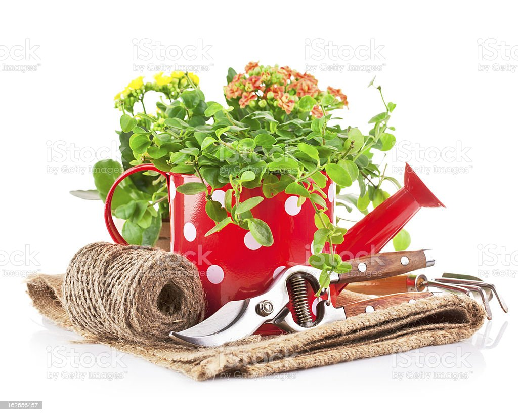 green plants in red watering can with garden tool royalty-free stock photo